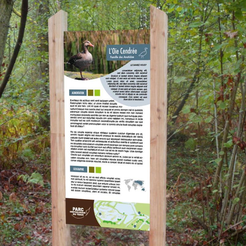 Panneau Oiseau L'Oie Cendrée issu de parc ornithologique du Teich, création de Frédérique Hayaux du Tilly, graphiste designer c com'créa