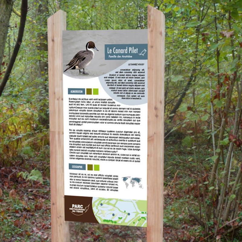 Panneau Oiseau le Canard Pilet issu de parc ornithologique du Teich, création de Frédérique Hayaux du Tilly, graphiste designer c com'créa