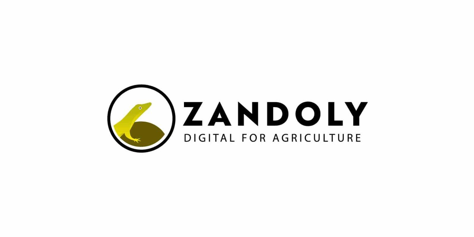 logo Zandoly, création graphique de C Com'Créa